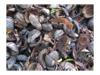 Vorschau: Kokos-Fußmatte