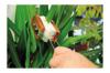 Vorschau: Blätterbürste